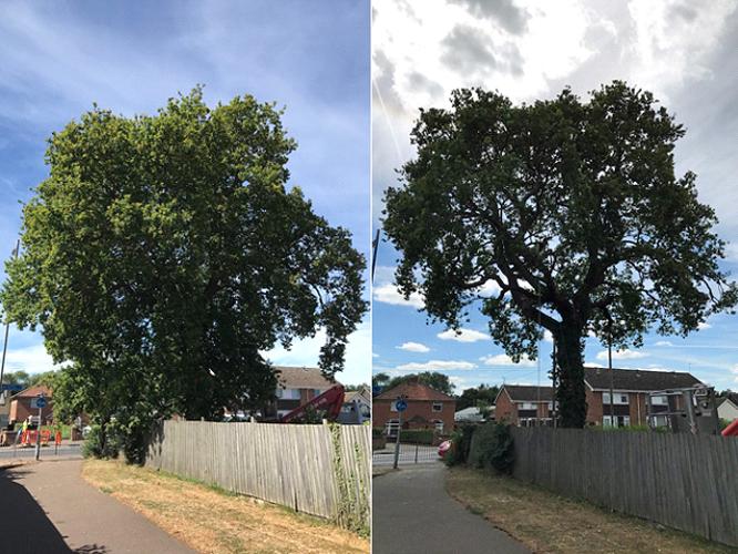 Tree Maintenance & Landscaping