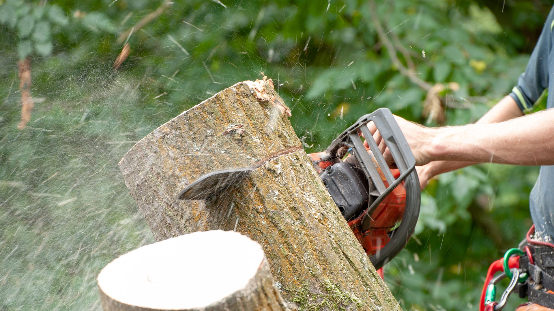 Waveney Tree Specialists